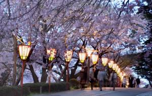 兼六園・夜桜